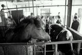 Wycieczka do Gospodarstwa Agroturystycznego na Kaszubach 27.06.2013